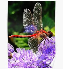 Red Dragonfly on Violet Purple Flowers Poster