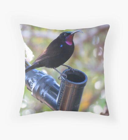 Black sunbird.  Throw Pillow
