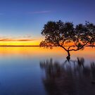 From Little Things Big Things Grow - Wellington Point Qld Australia by Beth  Wode
