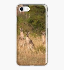 Trio of Posing Kangaroos iPhone Case/Skin