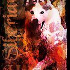 Sibirischer Husky von Jay Payne