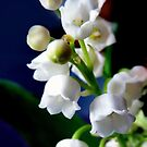 Fête du Muguet - (lily of the valley) by bubblehex08