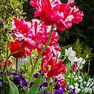 Tulip Explosion by vivsworld