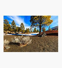 San Francisco Peaks Arizona Photographic Print