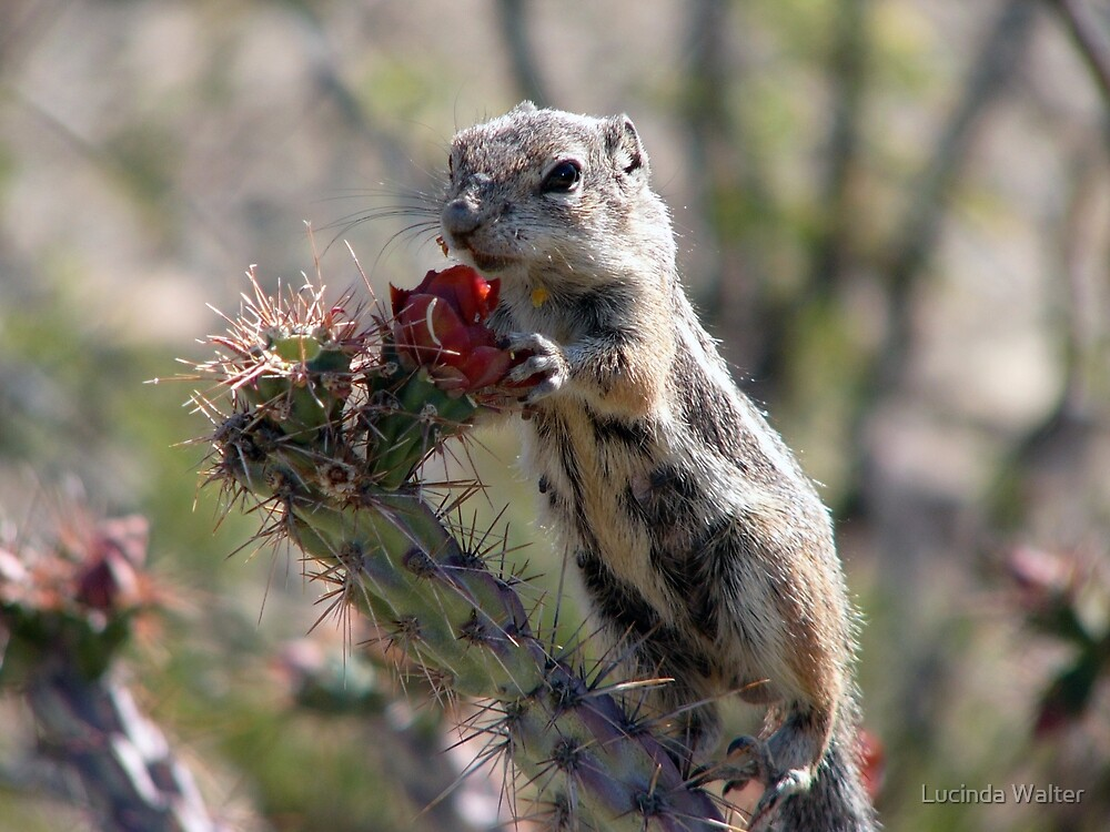 Those Flower Pedals Taste Mighty Good by Lucinda Walter