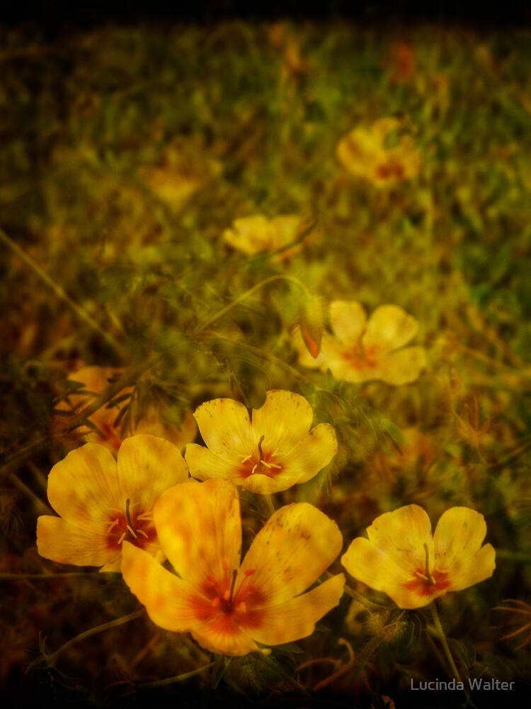 Late Summer Wildflowers by Lucinda Walter