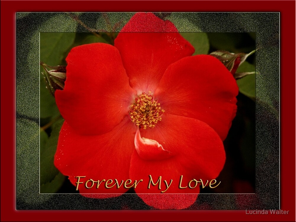 My Love by Lucinda Walter