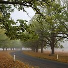 The Road Beckons - New England NSW by Barbara Burkhardt