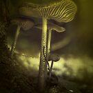 Tiny little mushrooms by EbyArts