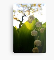 Convallaria Majalis - Lily Of The Valley Flower Filled With Sunrise | Melville, New York Metal Print