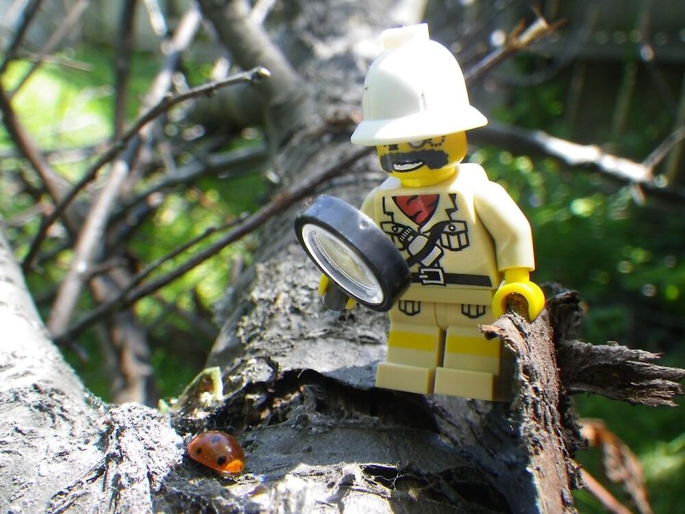 Ladybug Explorer by Shauna  Kosoris
