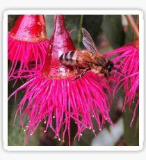 Bee Food - Flowering Red Gum - Macro  Sticker