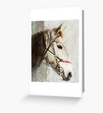 A horse called Meggs Greeting Card