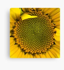 Sunflower - Macro Canvas Print