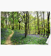 Bluebell Trail Poster