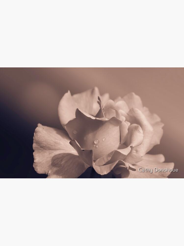 Antique Rose by cdonohoue