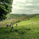 Dovedale lambs by Jacki  Clark