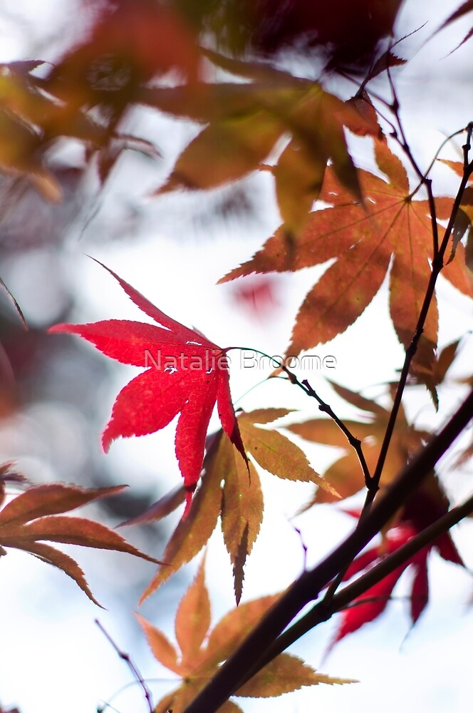 Autumn Leaves by Natalie Broome