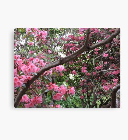 Sunshine and Pink Canvas Print