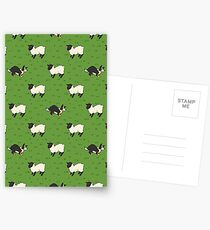 Come Bye - Tri-color dog and black sheep Postcards