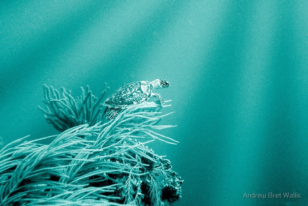 Into The Blue by Andrew Bret Wallis