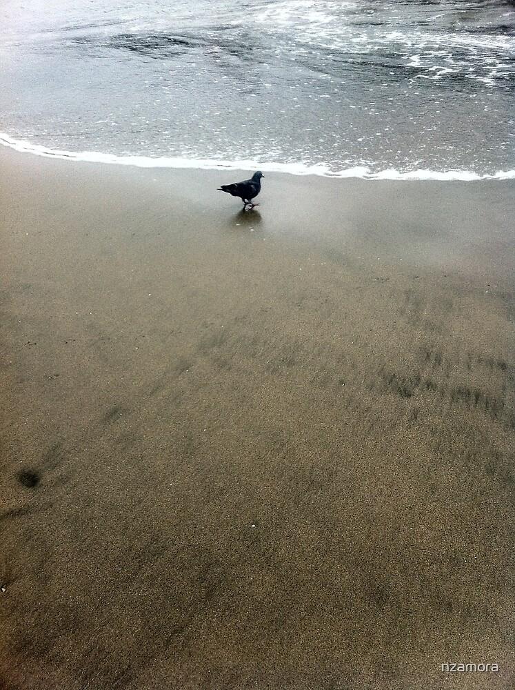 Pigeon on Santa Cruz Beach by Nicole Zamora