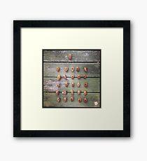 Cicada Shells Framed Print