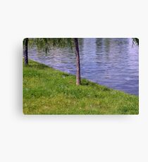 Soap bubbles in the park. Canvas Print