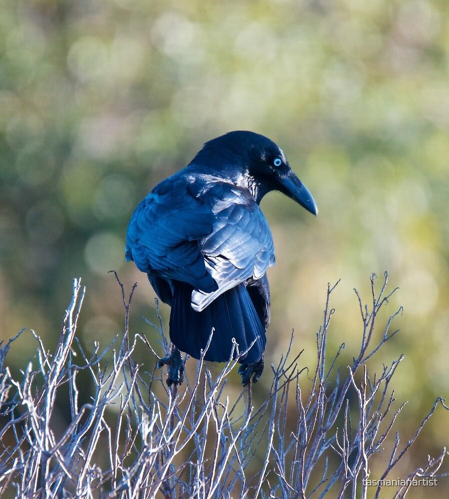 RAVEN ~ Forest Raven by David Irwin by tasmanianartist