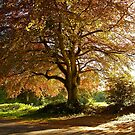 Copper Beech in Rural Hampshire  by Alex Cassels