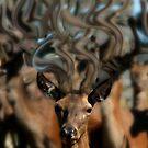 Dreams of Deer 2 by Wayne King