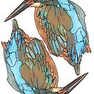 Kingfishers by Colin Bentham