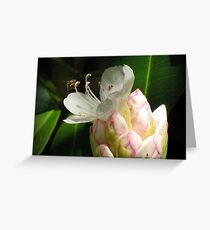 Rhododendron Pollination Greeting Card