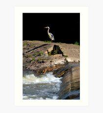 Heron at the Weir Art Print