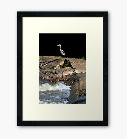 Heron at the Weir Framed Print