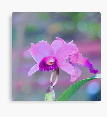 Pink Orchid Print. Canvas Print