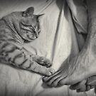 Life is Better With a Cat by Maria  Gonzalez