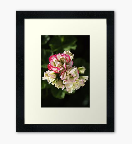 Geranium Soft White and Pink Framed Print
