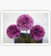 Purple Dahlias Sticker
