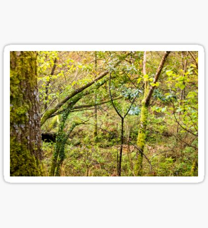 Green nature Sticker
