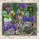 Succulent garden display by NadineMay