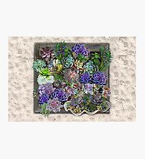 Succulent garden display Photographic Print