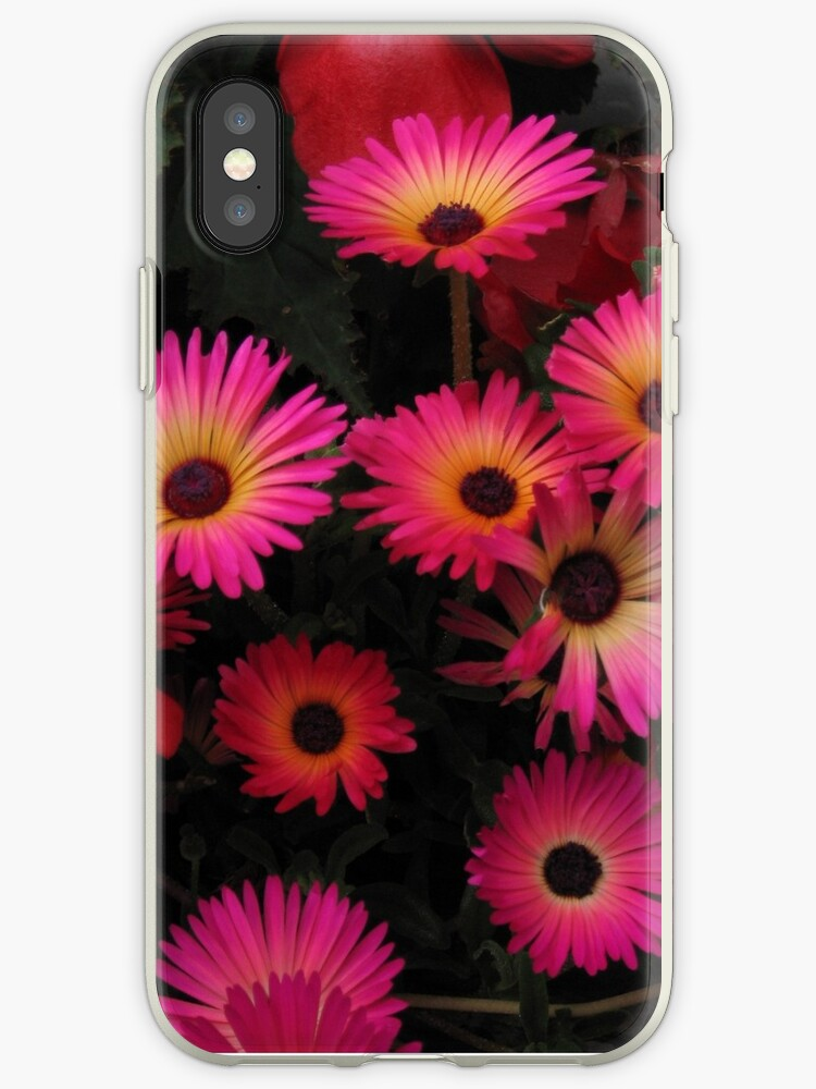 Livingstone Daisies by Tracey Pacitti