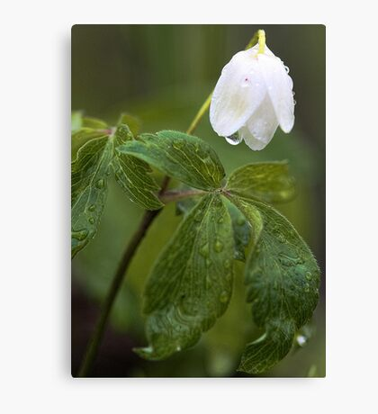 Wildflower -  After The Spring Rain Canvas Print