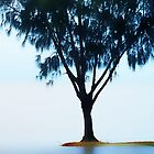 One Tree at the Ocean..........Cairns by Imi Koetz
