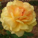 Yellow Rose by BrandyHouse