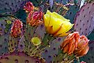 Cactus Bloom by Larry Costales