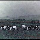 Longview Cows by Wayne King