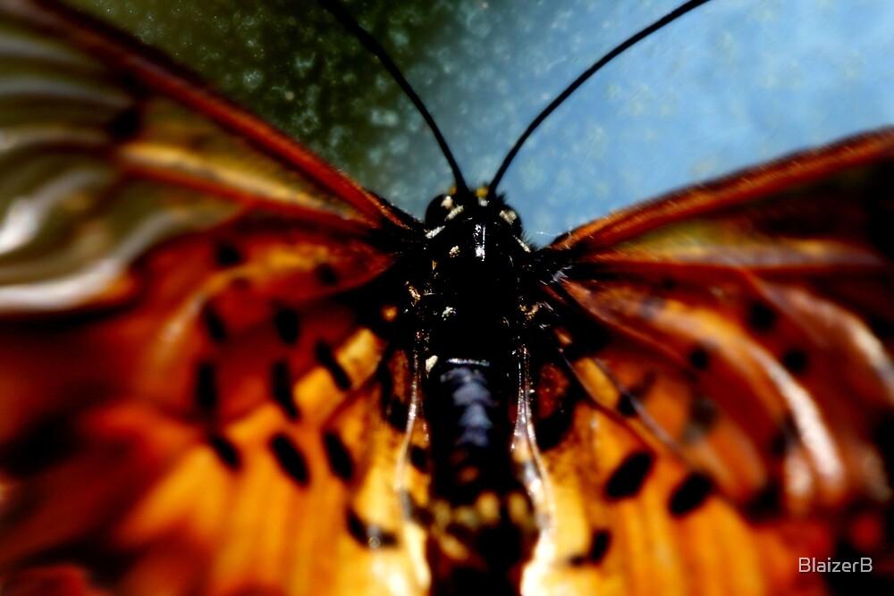 Beautiful Butterfly by BlaizerB
