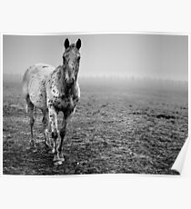 Appaloosa in the fog (2) Poster